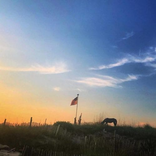 wild horse with flag