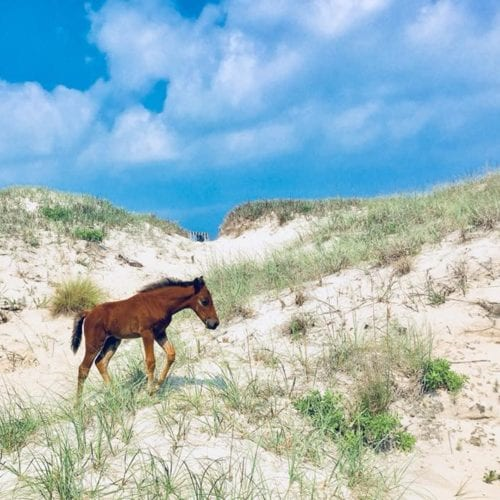 horse with blue sky