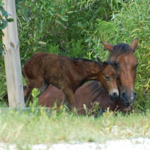 wild horse and baby