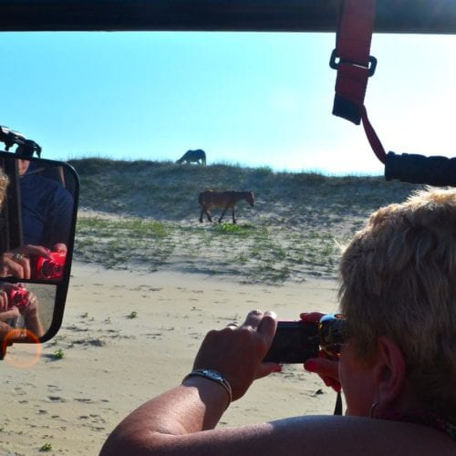 people viewing corolla wild horses