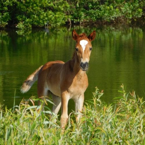 curious baby wild horse