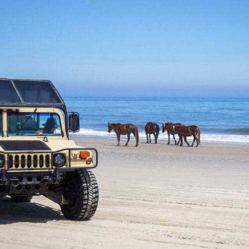 wild horses and hummer on beach
