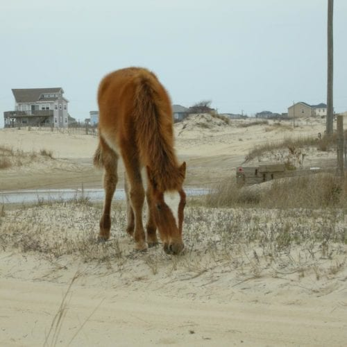 wild horse by corolla rental house